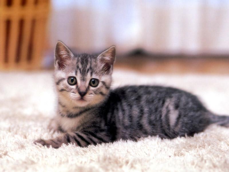 Cat 36 jpeg