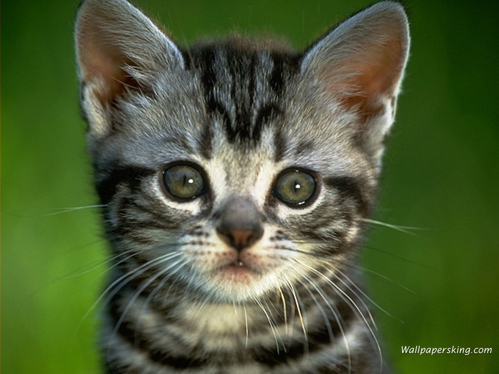 art-collection - CAT